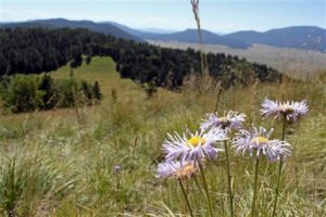 New Mexico ranchers worry about possible land restrictions