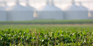 Compete on soybean yield, value