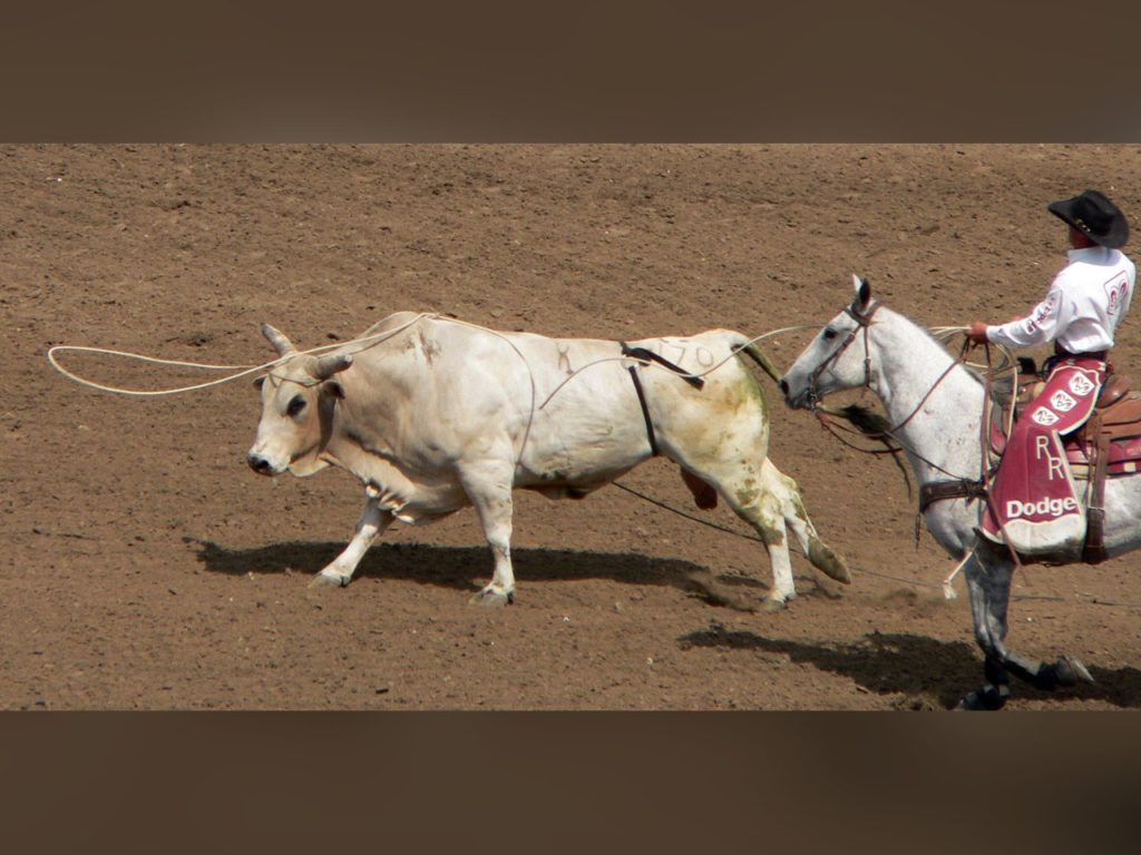 With new horse, Bayard steer wrestler wins six rodeos