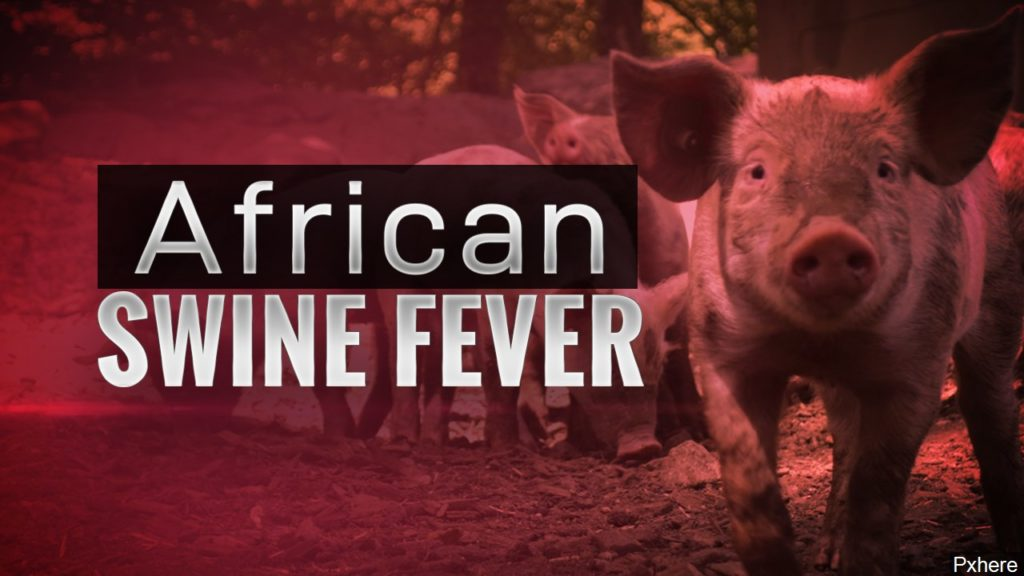 Japan detects African swine fever at infectious stage for 1st time