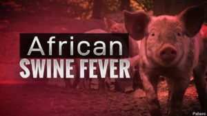 Japan Finds African Swine Fever in Travelers Suitcase from China
