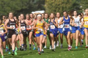 Area teams, runners shine at cross country District meets