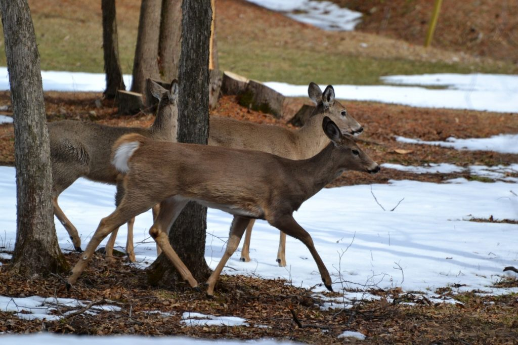 Firearm deer season opens Nov. 10