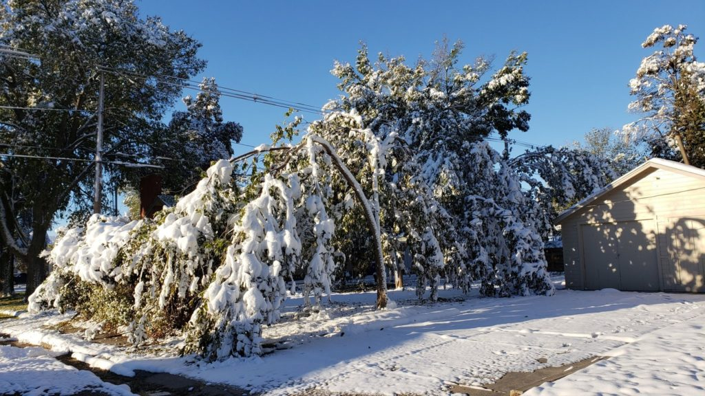 Wet snow and cold cause devastating damage to area trees
