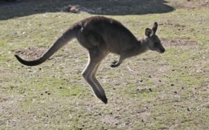 School cook: Kangaroo meat was nutritious part of his chili