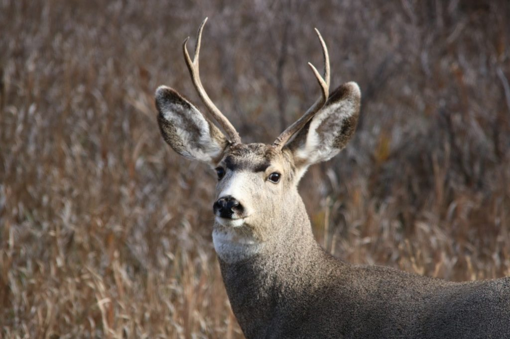 Muzzleloader deer season opens Dec. 1