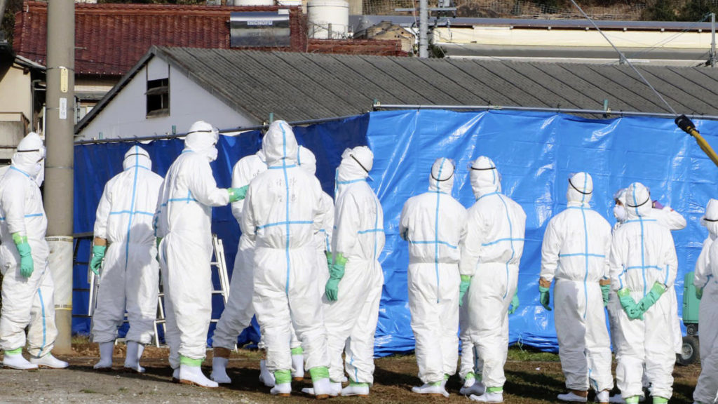 UPDATE1: Hog cholera crisis deepens in Japan, troops sent to contain virus
