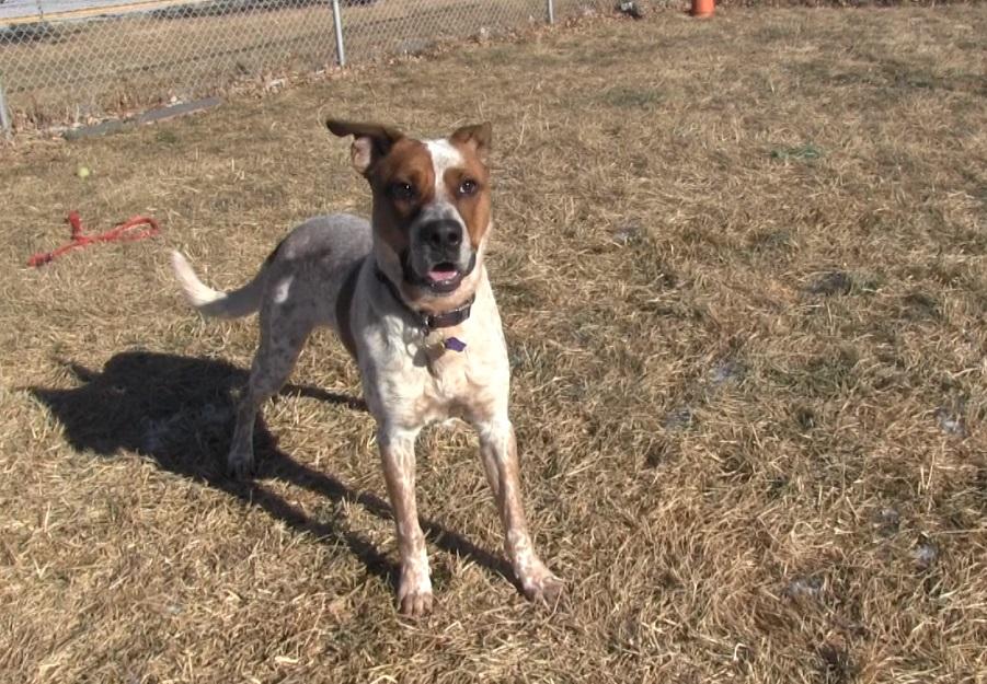 Meet Ajax- the Panhandle Humane Society Pet of the Week