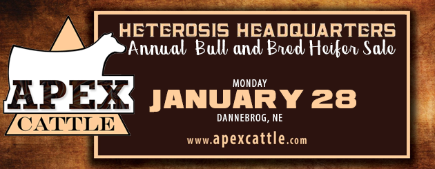 APEX Cattle Co