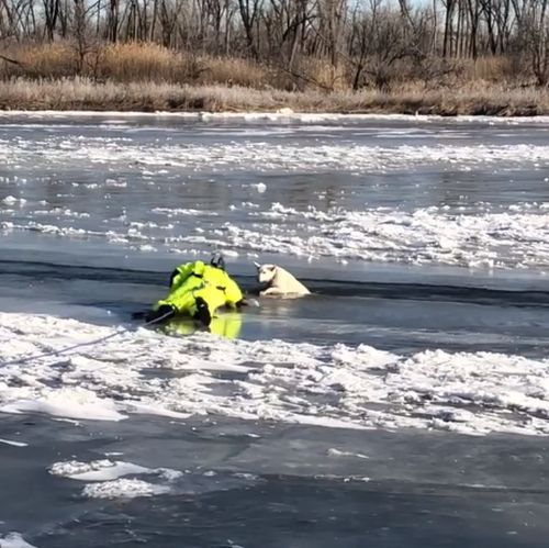 (Video) North Platte & area agencies rescue two dogs in the river