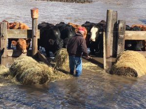 Kansas Farm Bureau Donates to Nebraska Farmers and Ranchers Affected by Flooding