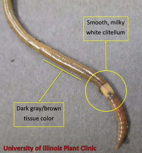 Asian jumping worms may pose threat to Nebraska ag
