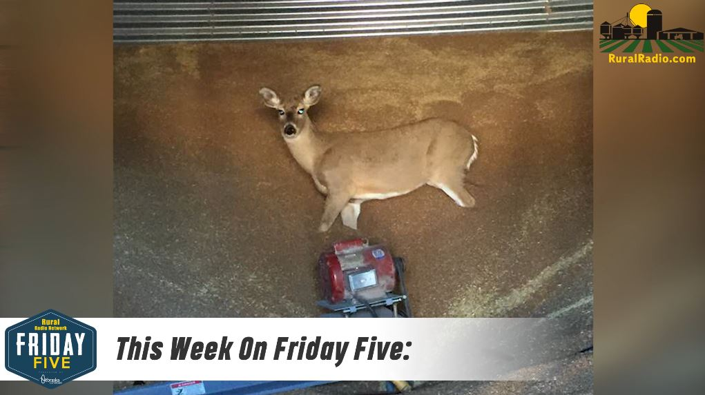 This Farmer Found WHAT In His Grain Bin?! – Friday Five (March 1, 2019)