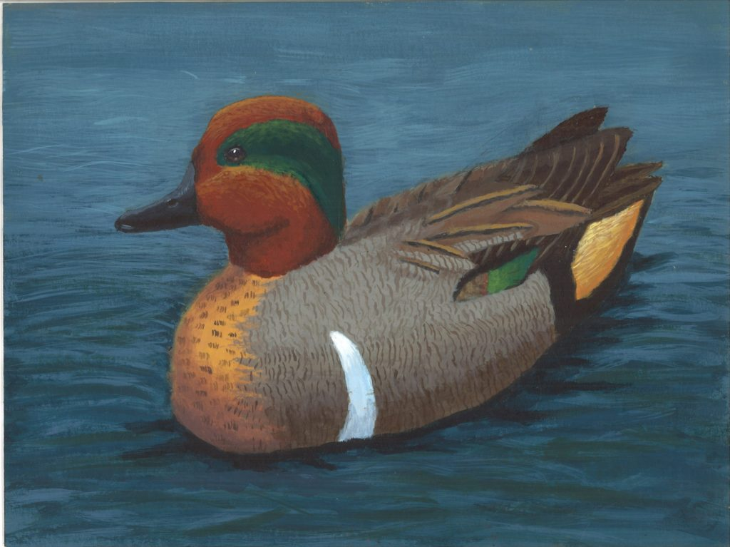 "Gering 14 year old wins ""Best of Show"" in Jr. Duck Stamp Contest"