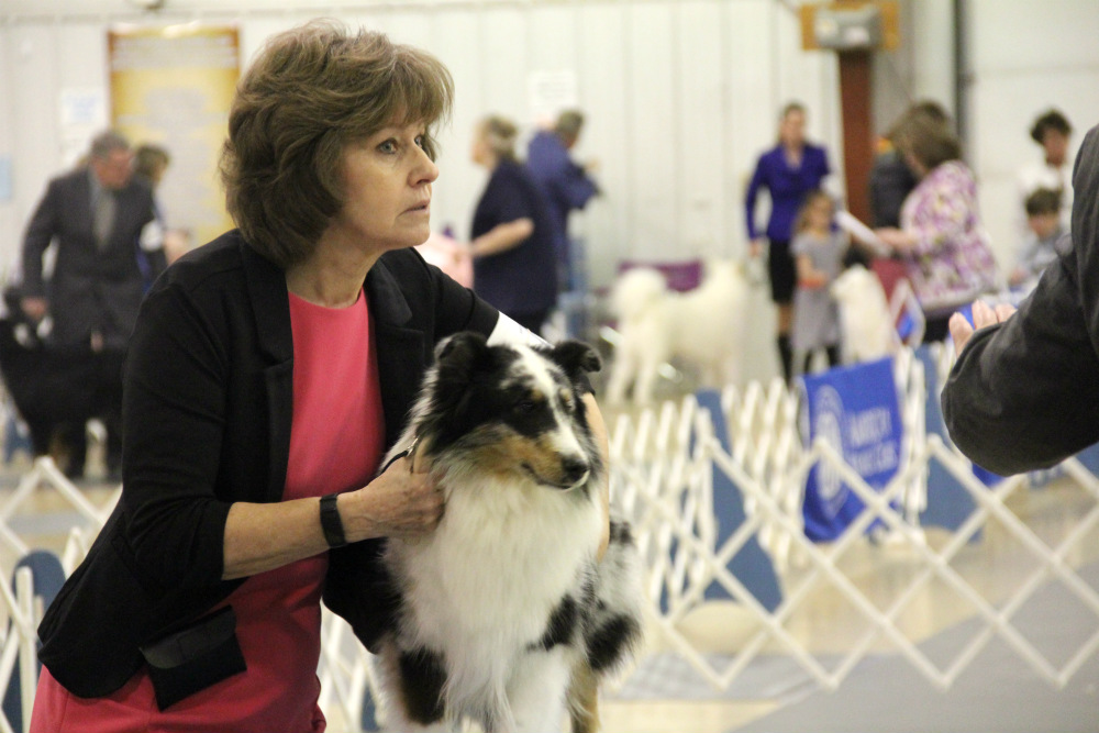 Breeds take to ring in 75th annual dog show