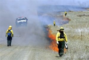New strategy aims to save sagebrush in Western states