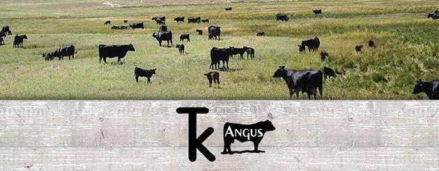 TK Angus