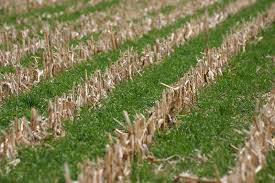 Funds Available to Plant Severe Weather Damaged Acres to Cover Crops