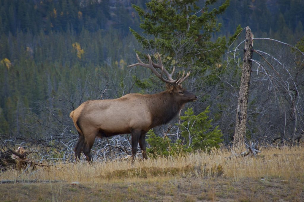 New process in place for awarding big game draw permits