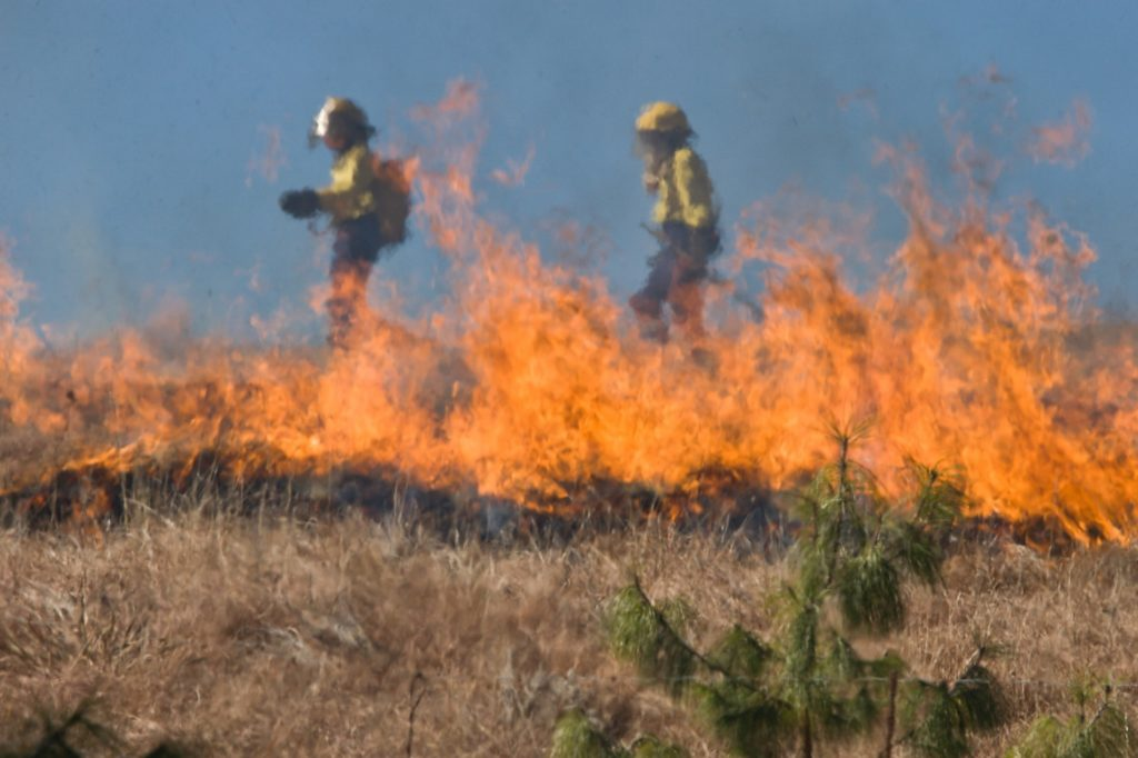 Drying Conditions Lead To Panhandle Wildfire Risk