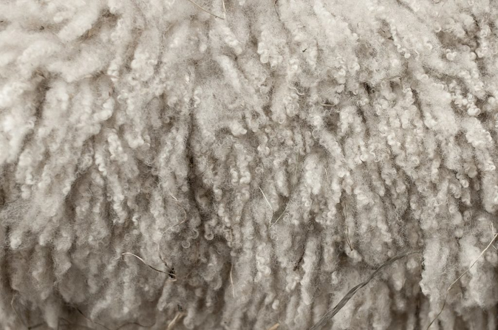 ASI Asks Administration to Support American Wool Producers