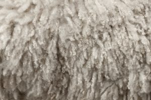 Webinar Covers Nuts and Bolts of Wool