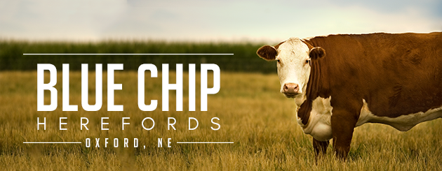 Blue Chip Herefords