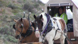 Kentucky woman driving horse drawn wagon to raise child hunger awareness