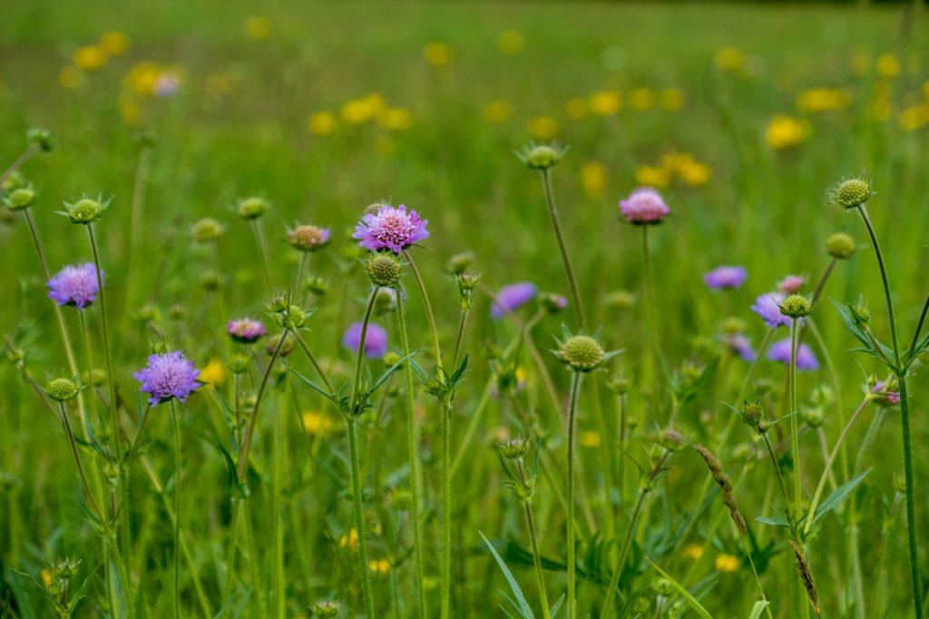 Western Nebraska Wildflower Week Festivities Announced