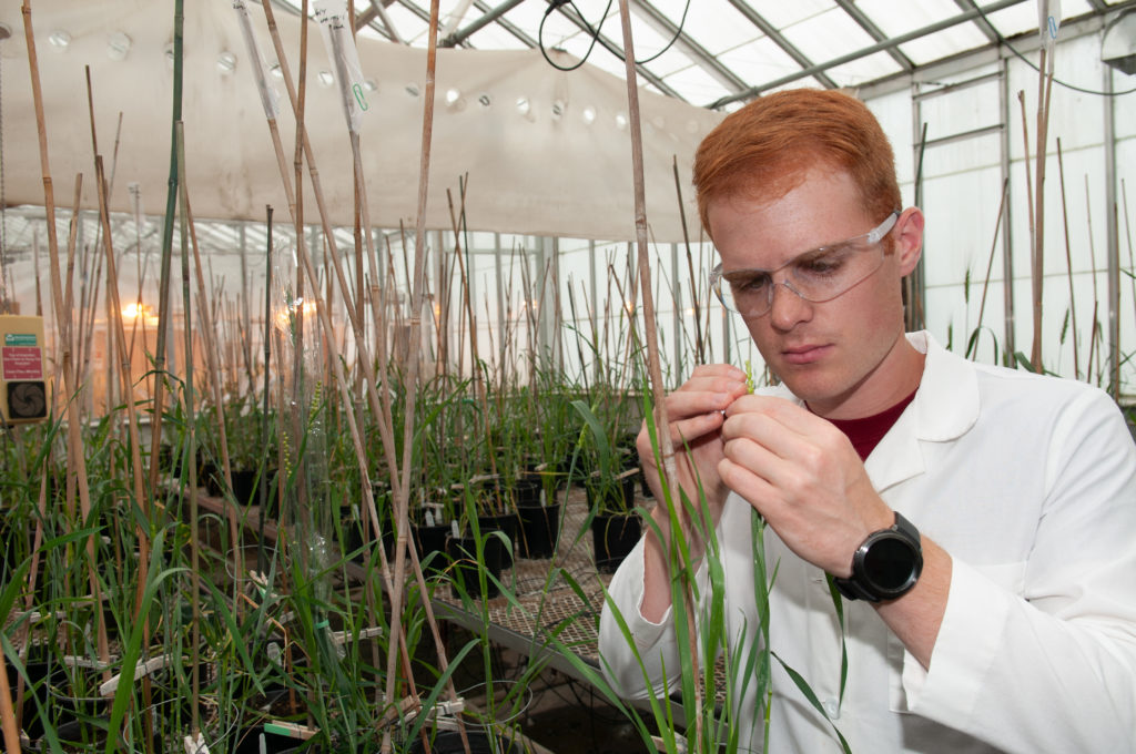 Students take on important plant-based research