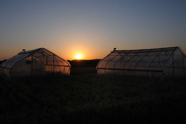 Crop Scientists Looking for Ways to Beat the Heat