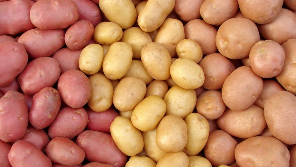 Sensory research digs deep to understand why people like potatoes