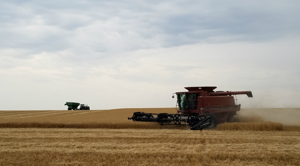 Winter Wheat harvest reports up and down