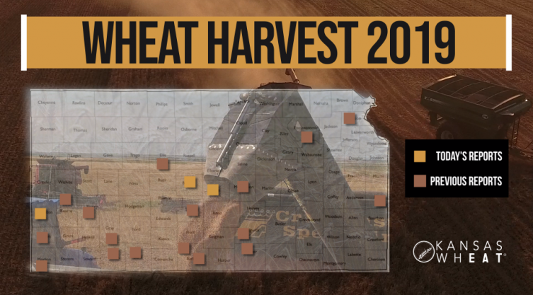 Day 7, Kansas Wheat Harvest Report