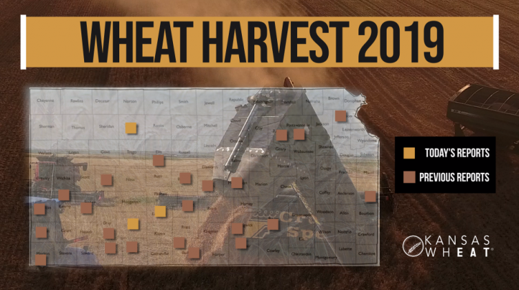 Day 9, Kansas Wheat Harvest Report
