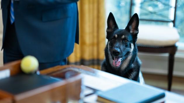 Biden's German shepherd Major back in doghouse for another biting incident