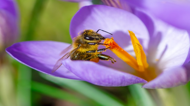Here's how you can help save bees and other pollinators