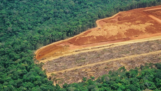 Amazon rainforest lost area the size of Israel in 2020