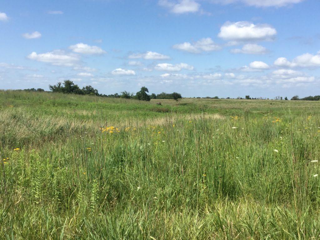 USDA expands and renews Conservation Reserve Program