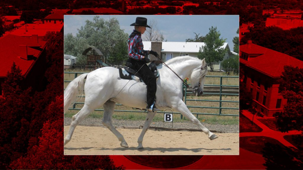 Department of Animal Science to host Western Dressage Clinic in August