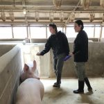 Study: U.S. pork industry needs more access to foreign-born workforce
