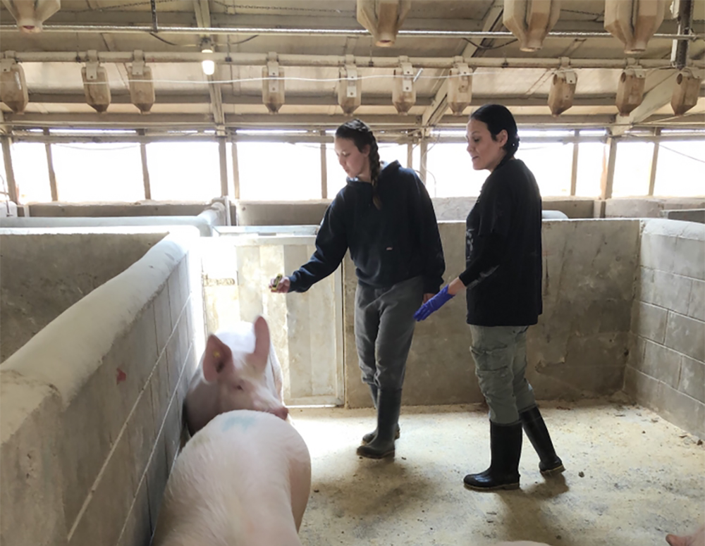 Animal rights group says 91 pigs died in cold at pork plant