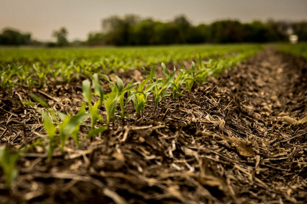 Expect more volatility in corn, soybean markets | Monday Morning Markets with Jeff Peterson