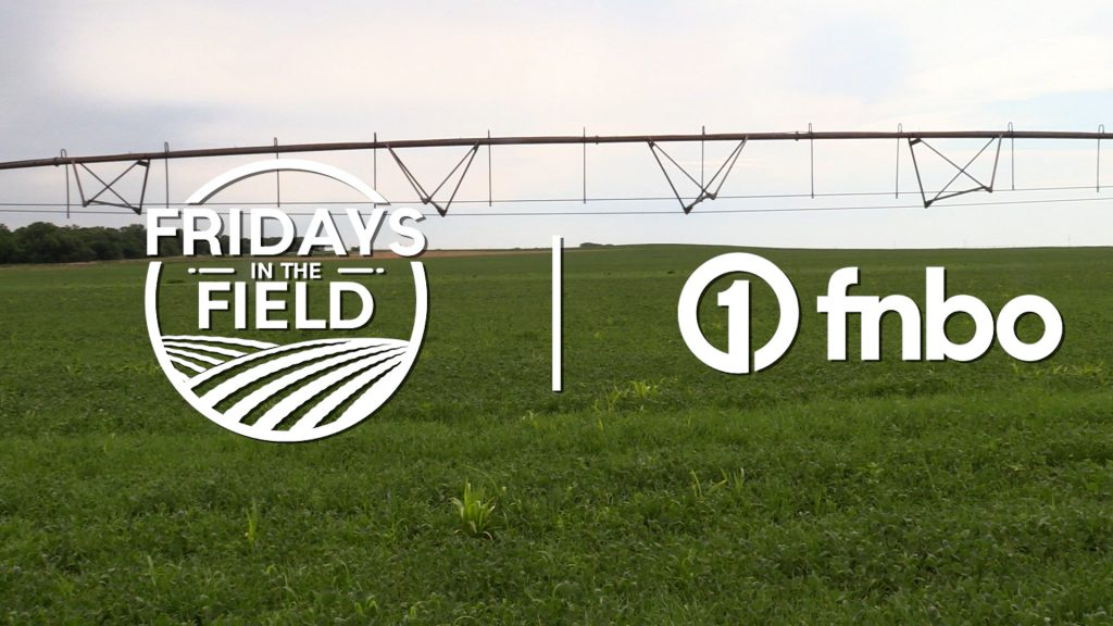 Organic farm focuses on early weed control in northeast Nebraska | 2021 Fridays in the Field | Ep. 8
