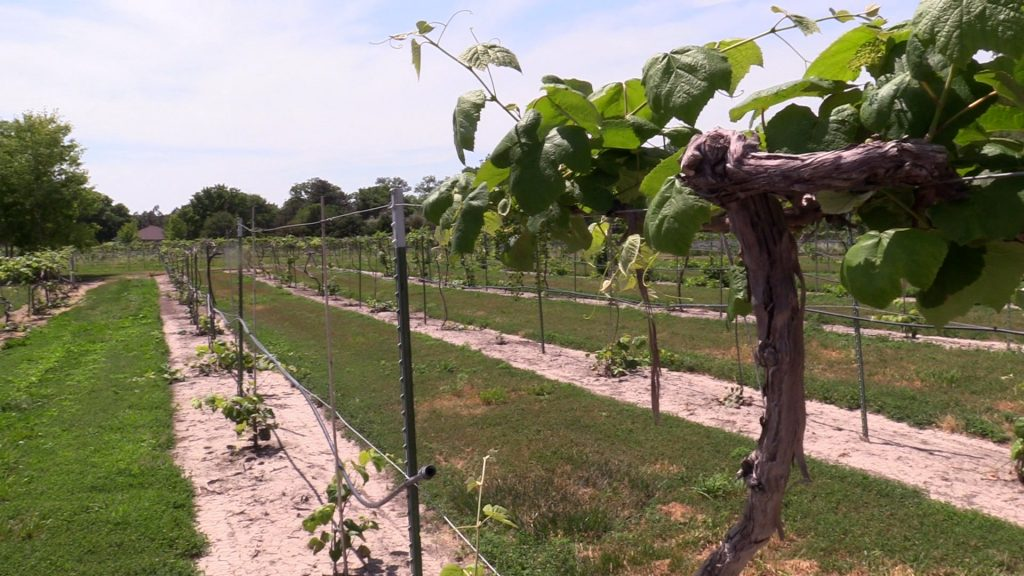 Nebraska winery embraces heat, tourism and technology   2021 Fridays in the Field   Ep. 7