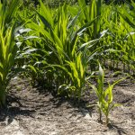 Farm and Ranch webinars planned on controlling input costs, grain marketing risk
