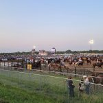 Volunteers round-up to help make rodeo a success in Lincoln