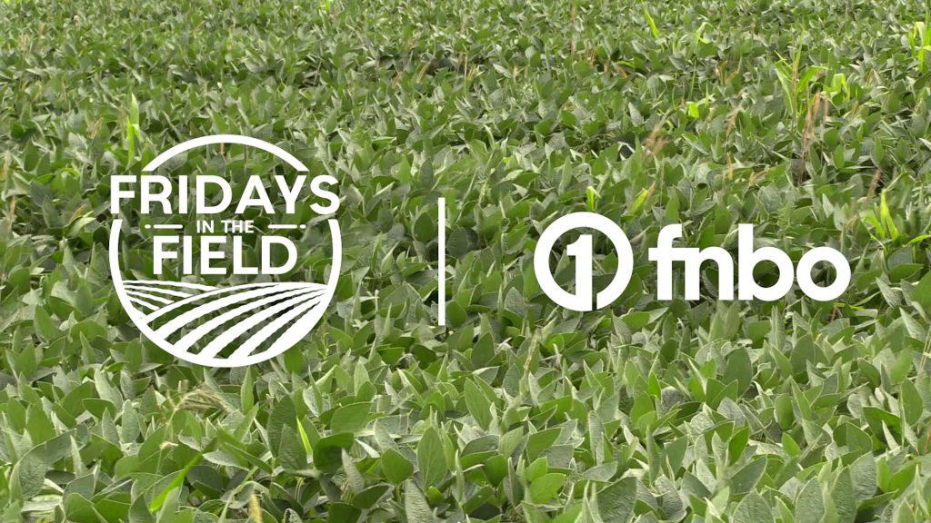 Organic crop maintenance in Northeast Nebraska | 2021 Fridays in the Field | Ep. 13