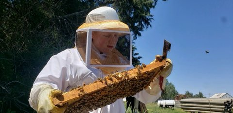 Fillmore County 4-Her stays as busy as her bees