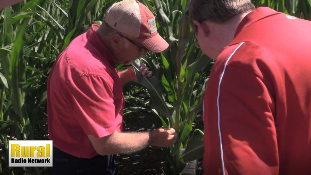 Reviewing WASDE Report and Previewing Pro Farmer Crop Tour | Monday Morning Markets | Aug. 16, 2021